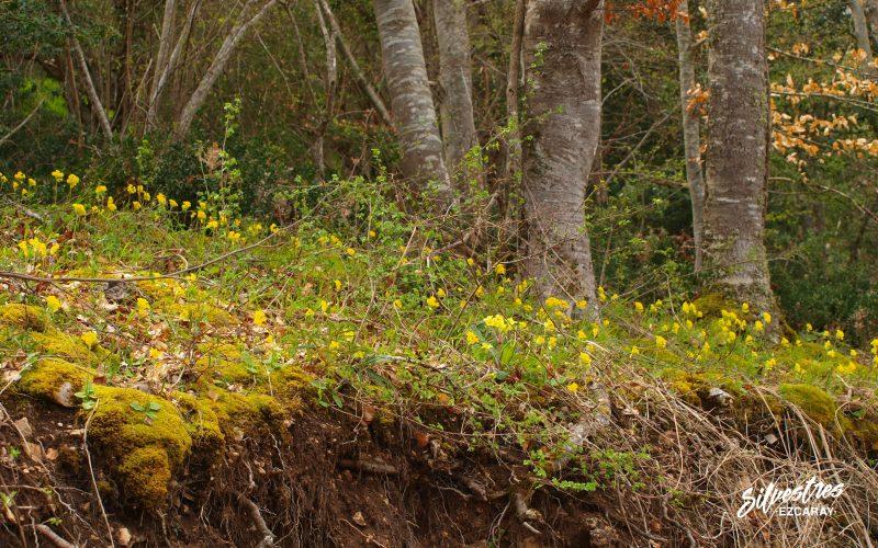 flora_flores_ezcaray_actividades_guia_botánico_ezcaray