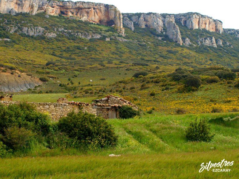 lumbier_sierra_leyre_colonias_buitres_acantilados_san_adrian_red_natura2000