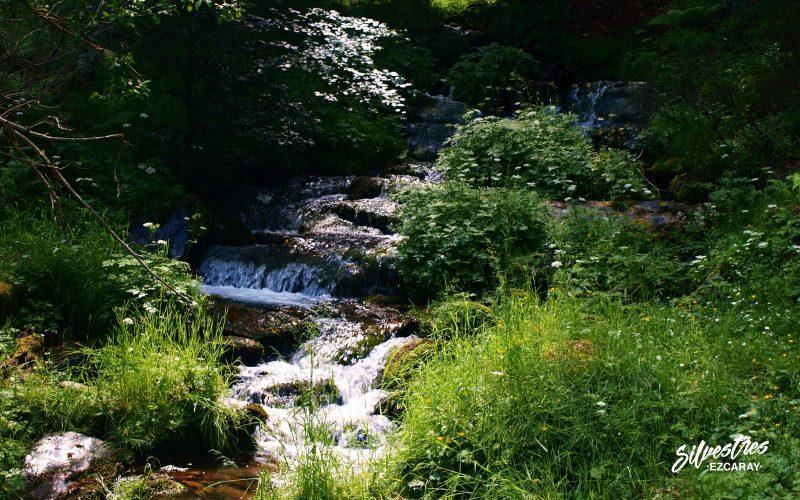 siete puentes_con_silvestres_ezcaray_educación_ambiental_la rioja_excursiones_colegios