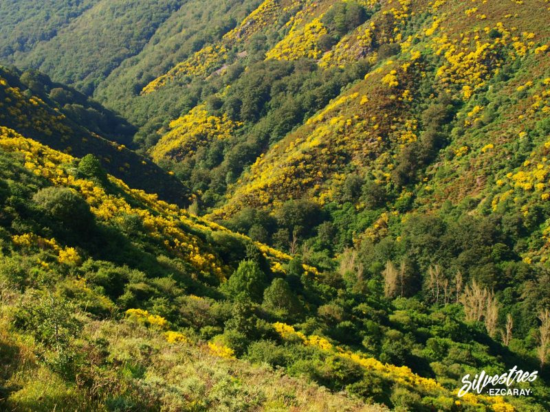 siete puentes_las_mejores_rutas_excursiones_por_ezcaray