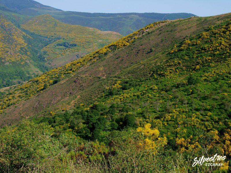 geología_rocas_la rioja_sierra_de_la demanda_sistema_ibérico