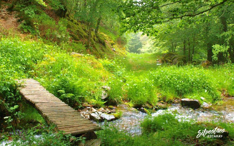 siete puentes_las_mejores_rutas_senderismo_en_ezcaray_la rioja_guia_de_naturaleza