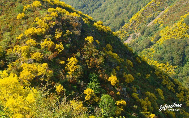 flora_vegetación_sierra_demanda_excursiones_botánicas