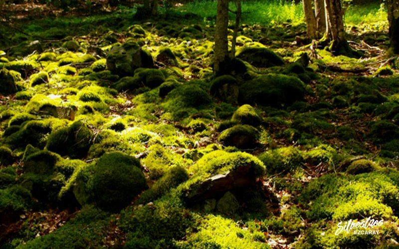 ecoturismo_rutas_verdes_senderismo_interpretativo_ezcaray