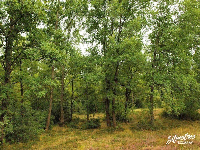 bosques_robles_la_rioja_habitats_lugares_micológicos_donde_buscar_setas