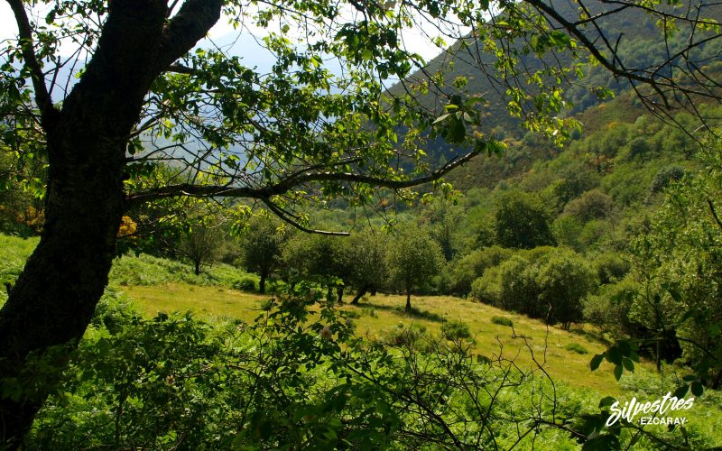 paisajes_vistas_ezcaray_ayabarrena_aldeas_turismo_la rioja