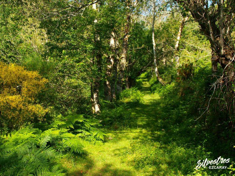 senderos_caminos_rutas_ezcaray_turismo_naturaleza_silvestres