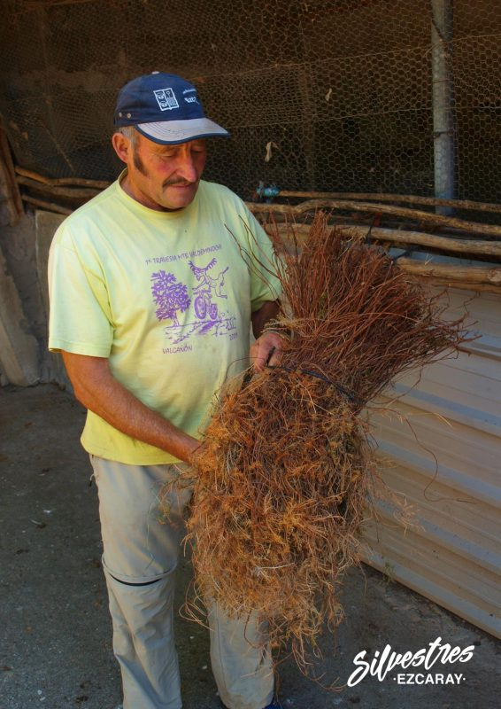escoba de brezo_como_se_fabrican_valgañón_la rioja