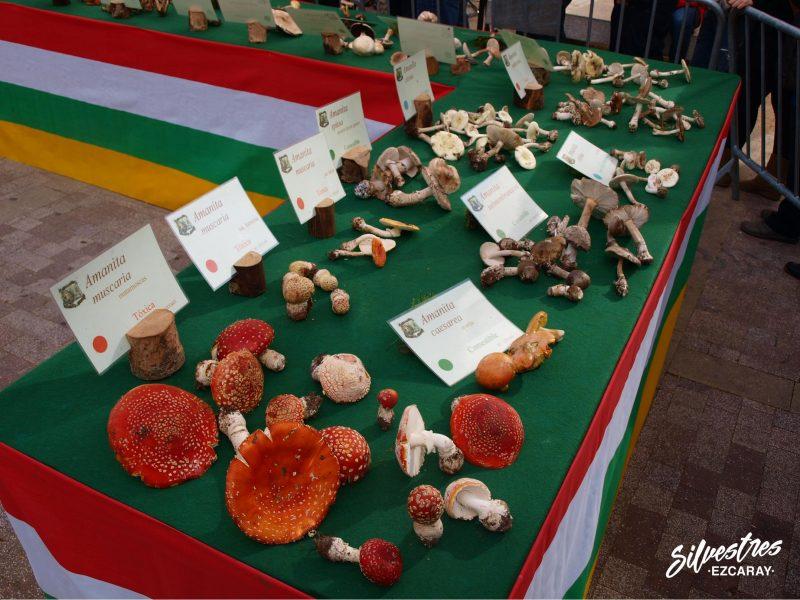 actividades_eventos_experiencias_ezcaray_la_rioja_setas_jornadas_micologicas_turismo