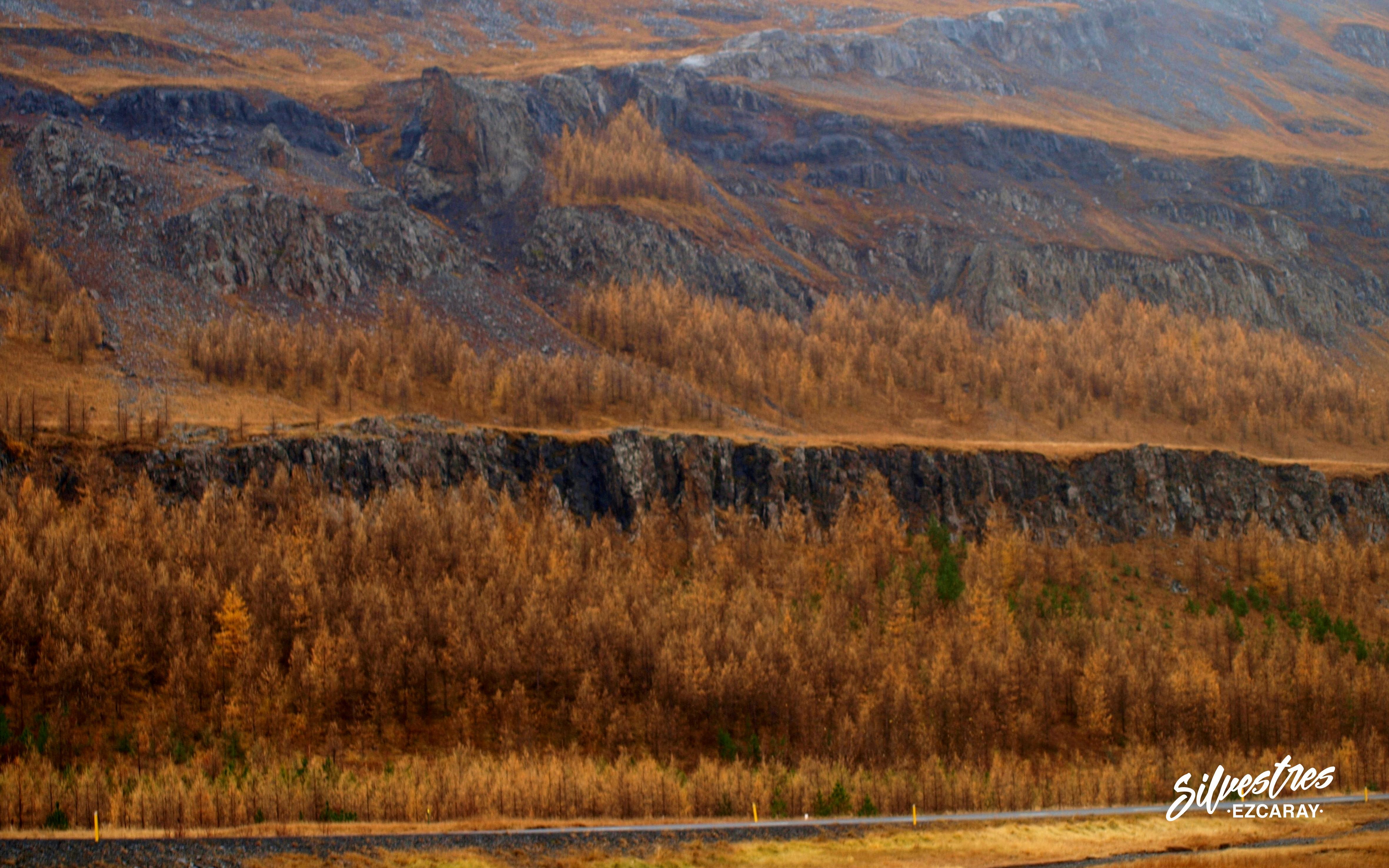 arboles_islandia_repoblaciones_plantaciones_forestales_alerce_larix_bosques