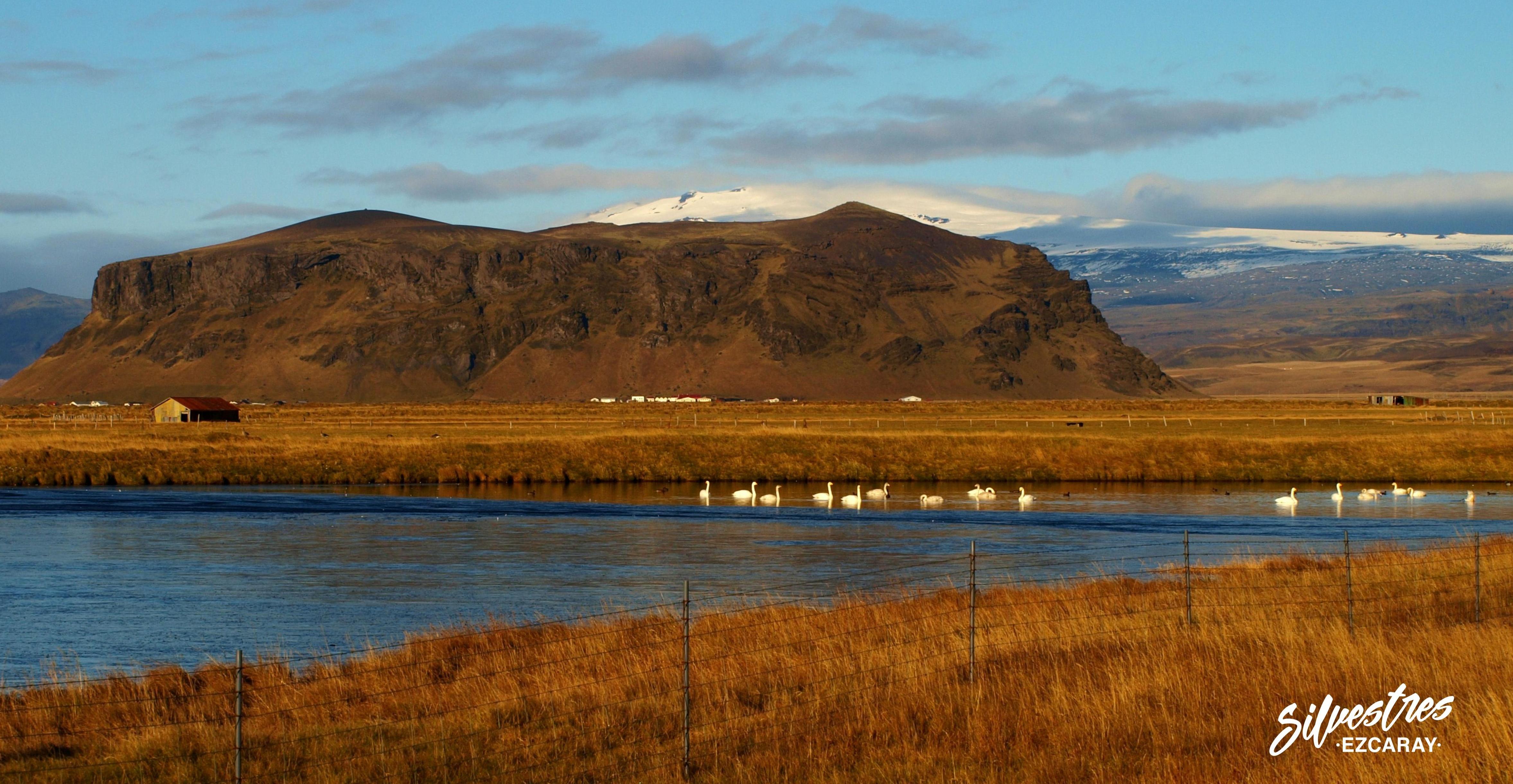 glaciares_volcanes_islandia_iceland_observacion_aves