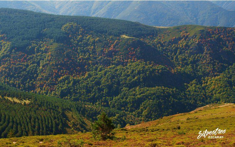 barranco_usaya_panoramicas_paisajes_ezcaray_collado_cobetia