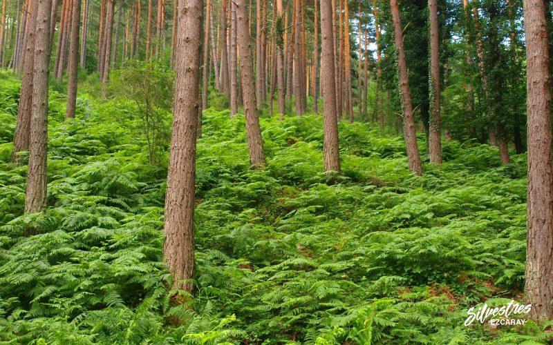 bosques_gestión_forestal_sostenible_la_rioja_valgañón_espacios_naturales_canalones