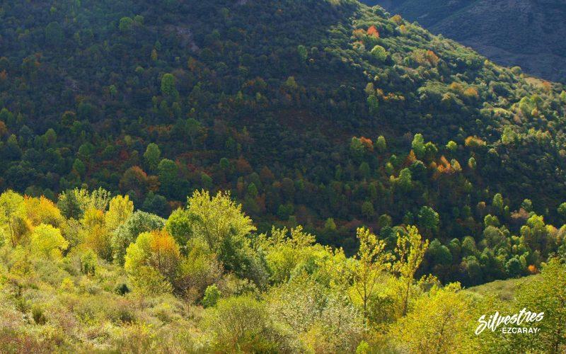 colores_otoño_fotografia_paisajes_ezcaray_bosques_medio_natural_zaldierna