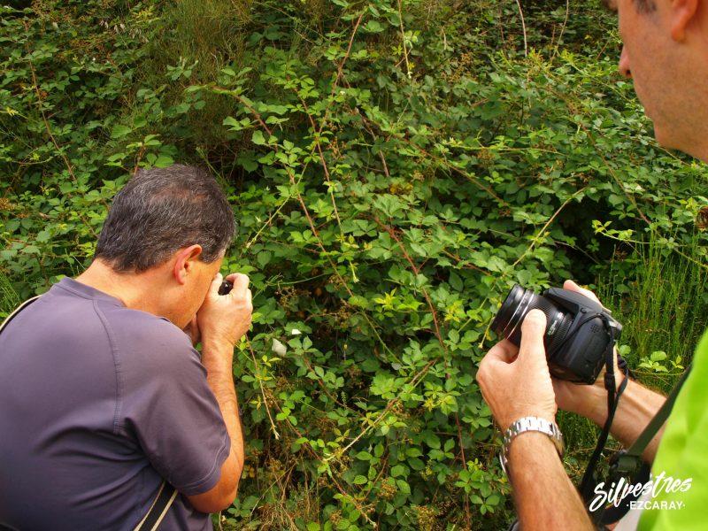 fotografía_naturaleza_paisajes_la_rioja_ezcaray_sierra_demanda_fauna_excuersiones