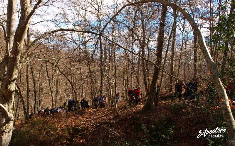 senderismo_rutas_ojacastro_barranco_bosques_artaso_club_de_montaña