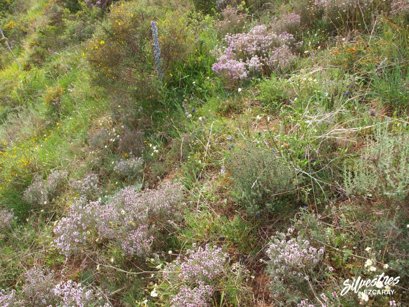 hábitats_red_natura_la_rioja_medio_natural_tomillares_orquídeas