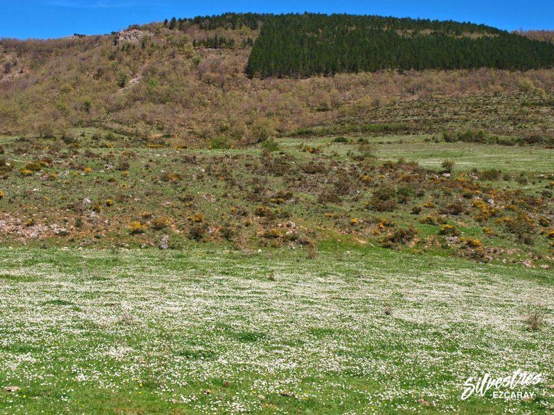 habitats_orquideas_orchids_la_rioja_spain_zorraquín_paisajes