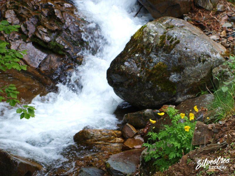 paisajes_lugares_sendas_ezcaray_barranco_ortigal_flora