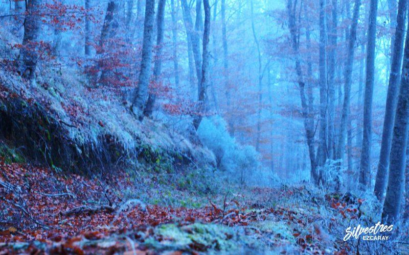senderismo_invierno_ezcaray_silvestres