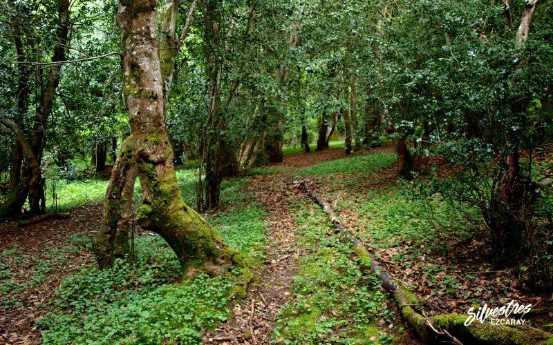 recorrido_por_el_acebal_valgañón_senderismo_rutas_silvestres_ezcaray