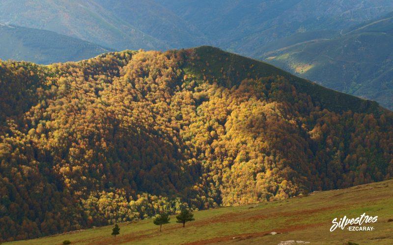 paisajes de ezcaray_rutas_barranco_hayedo_de_usaya_empresa_silvestres