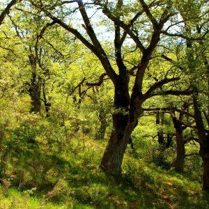 bosques de ezcaray_ecoturismo_que_hacer_seilvestres_ezcaray_actividades