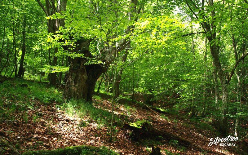bosques de ezcaray_paisajes_red_natura_en_la_rioja_medio_ambiente