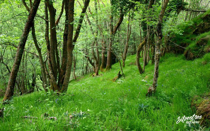 bosques de ezcaray_ecoturismo_empresa_silvestres_senderismo_con_niños