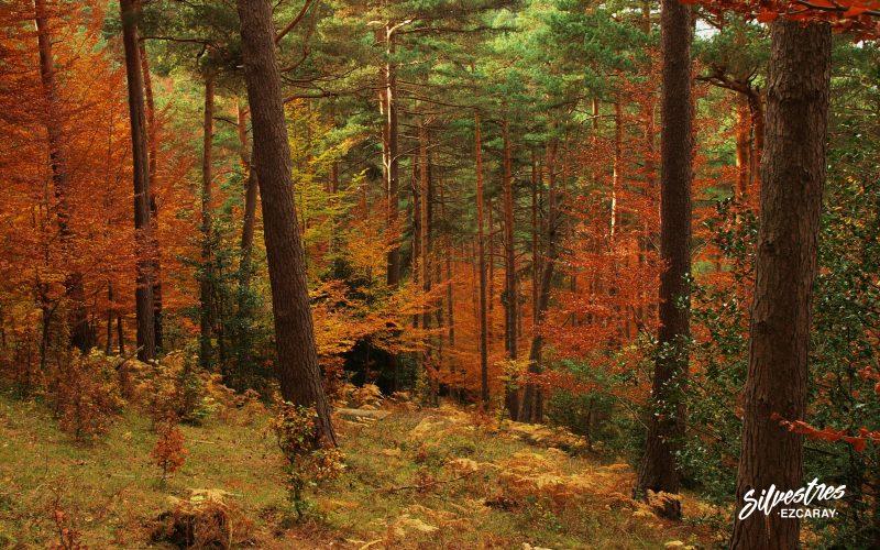 bosques de ezcaray_las_mejores_vistas_panorámicas_que_visitar_empresa_silvestres
