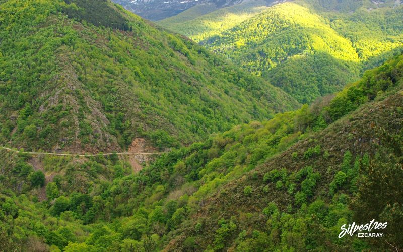 los mejores_paisajes_ezcaray_ecoturismo_empresa_silvestres