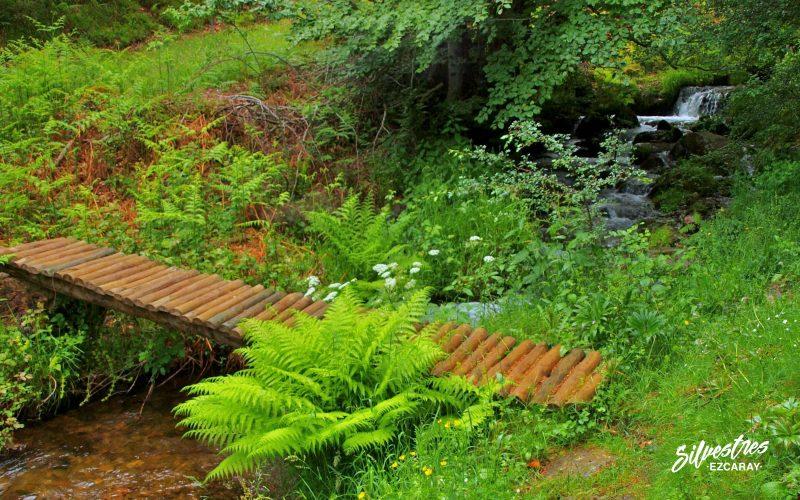 senderismo en ezcaray_rutas_siete_puentes_usaya_bosque