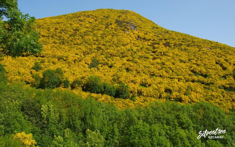 senderismo_en_ezcaray_montes_flora_paisajes_menarez