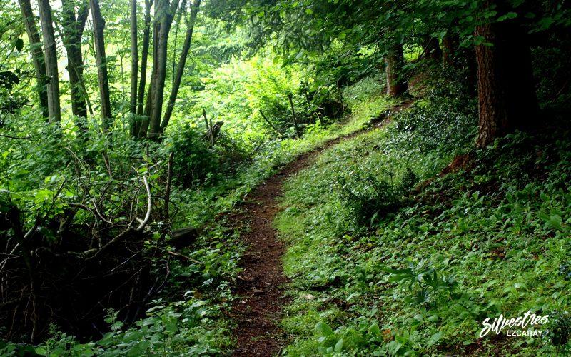 senderismo en ezcaray_rutas_bosques_que_visitar_empresa_turismo