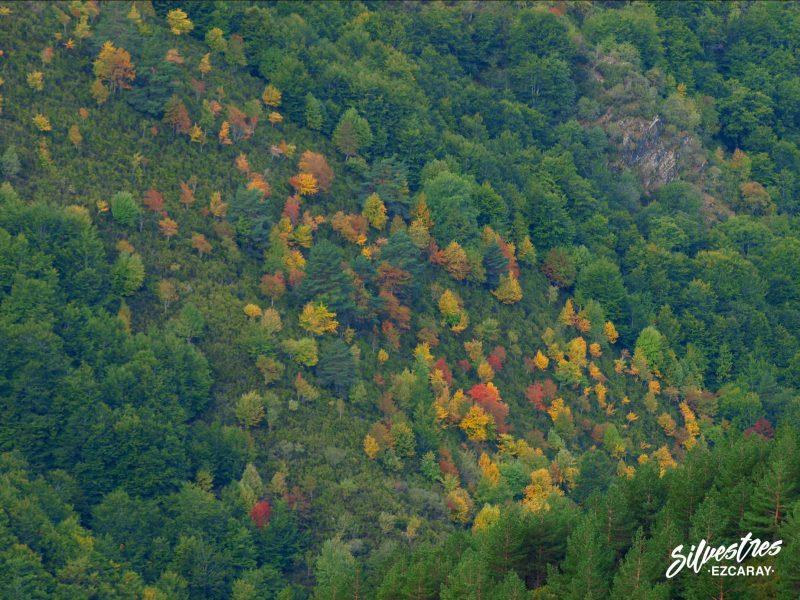 bosques otoño ezcaray
