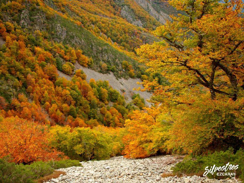 hayedos otoño rutas ezcaray