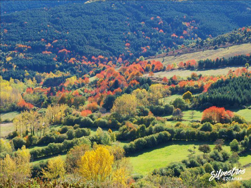 rutas otoño valgañón