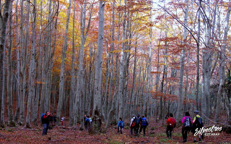 senderismo otoño ezcaray