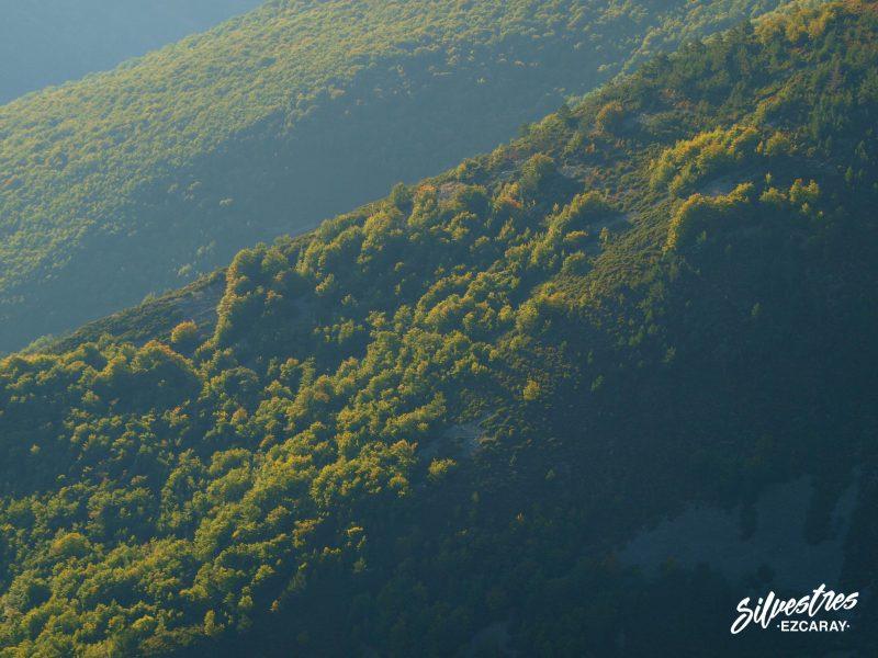 bosques otoño ecaray