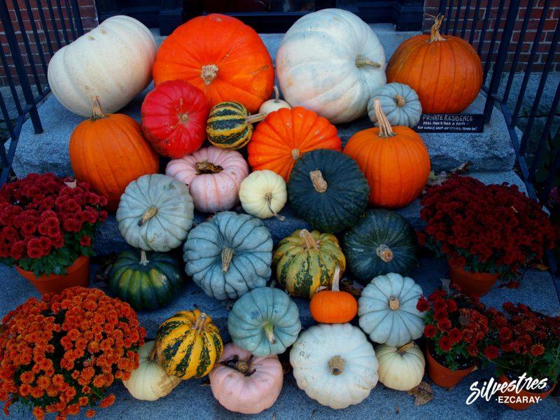halloween_nueva_inglaterra_vermont_estados_unidos_calabazas_granjas_decoración