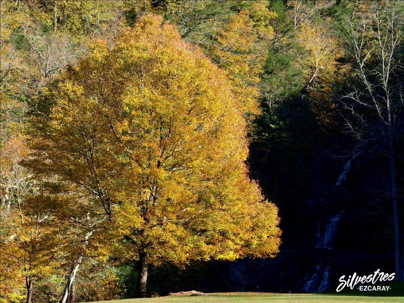 bosques_otoñales_nueva_inglaterra