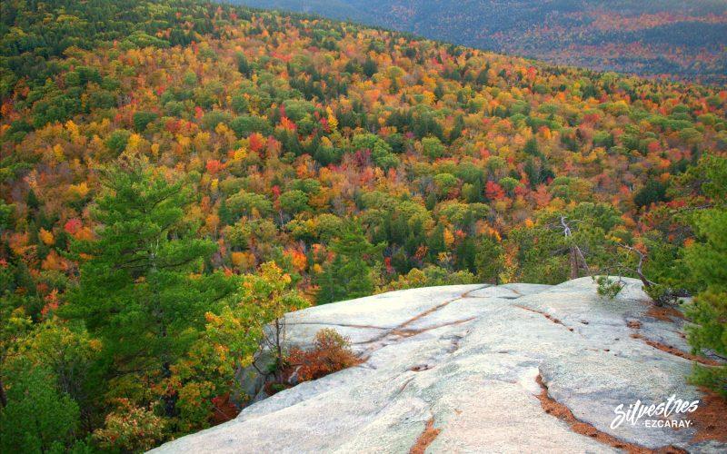 otoño_nueva_inglaterra_guia_montaña