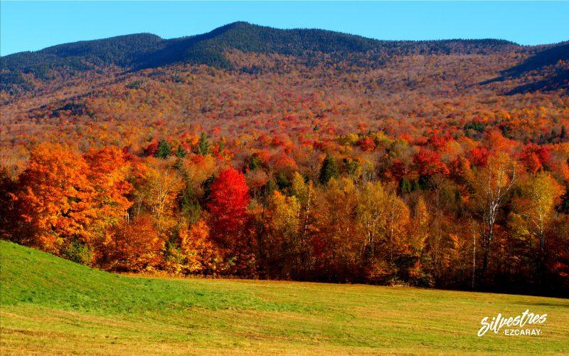 bosques_nueva_inglaterra_green_mountain