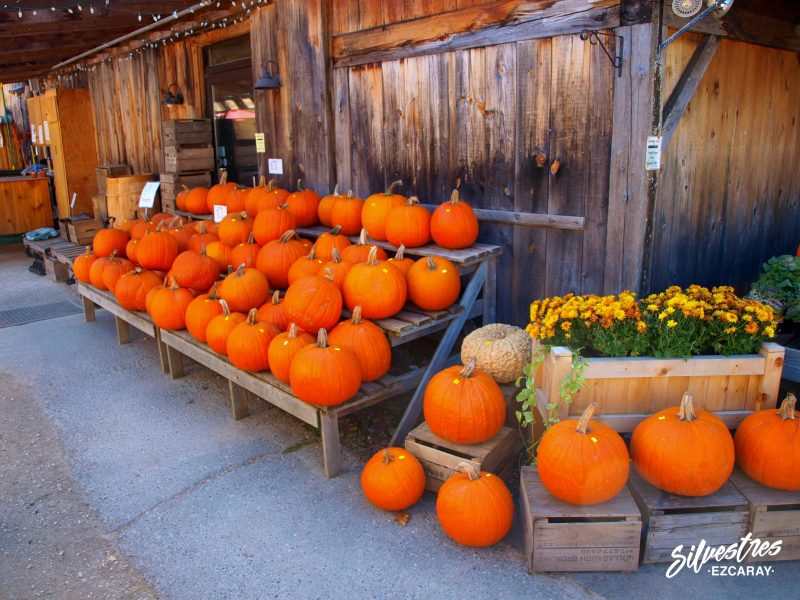 viajar_que_visitar_nueva_inglaterra_otoño_vermot_pueblos_con_encanto_granjas_calabazas
