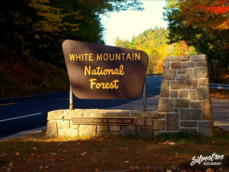 white_mountain_national_forest