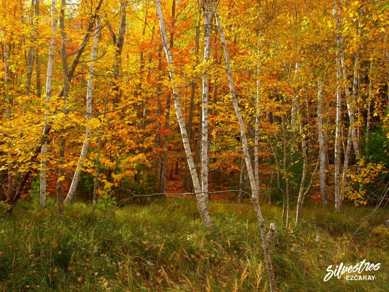 visit_acadia_forest_trails_paths