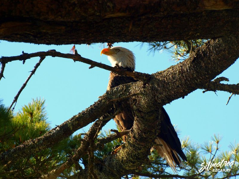 observar_aves_acadia_parque_nacional