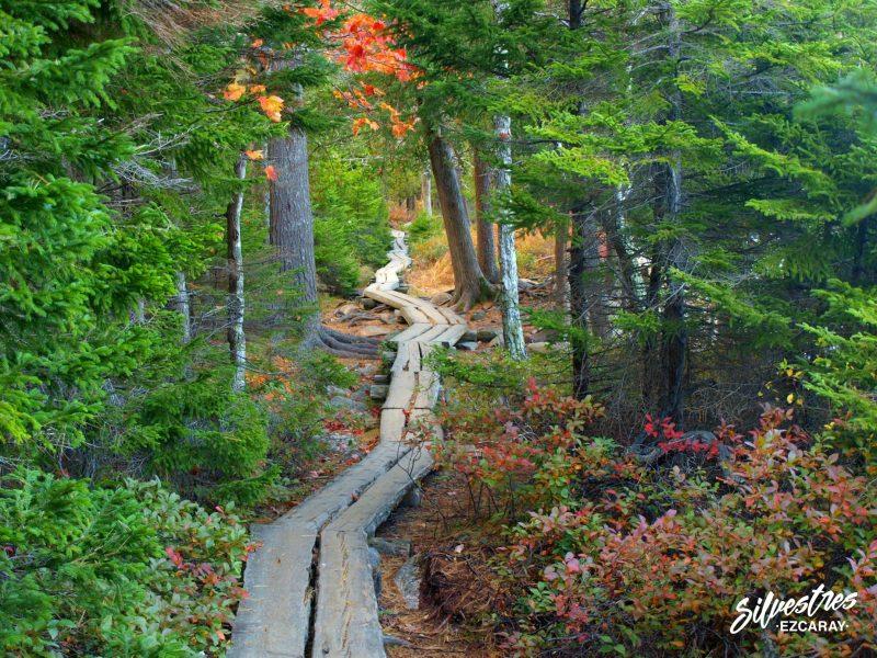 mejores_senderos_acadia_parque_nacional