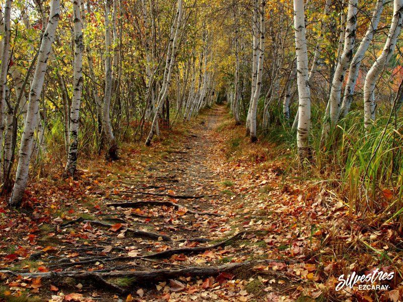 senderismo_naturaleza_árboles_senderos_acadia