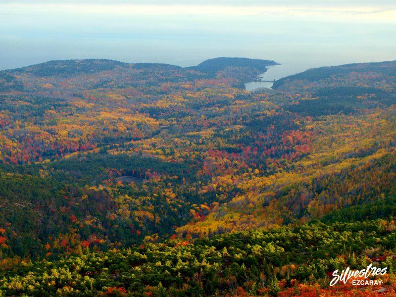 bosques_acadia_otoño